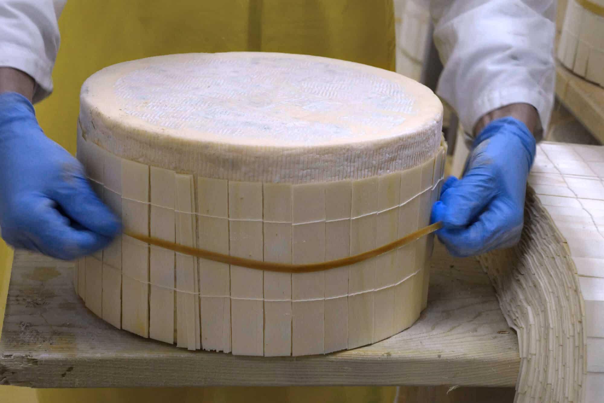 Processo di fascettatura Gorgonzola DOP